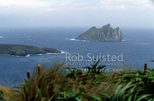 Dent Island, beyond Complex Point, Campbell Island, Campbell Island, NZ Sub Antarctic District, NZ Sub Antarctic Region, New Zealand (NZ) stock photo.