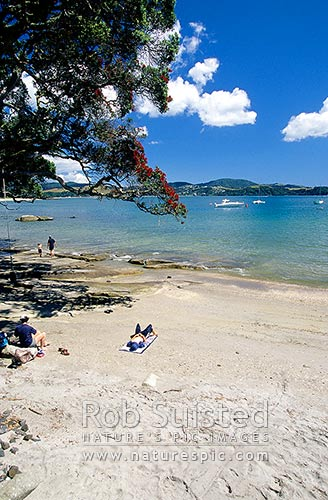 People relaxing under Pohutukawa at Maramaratotara Bay, Cooks Beach, midsummer, Coromandel Peninsula, Thames-Coromandel District, Waikato Region, New Zealand (NZ) stock photo.