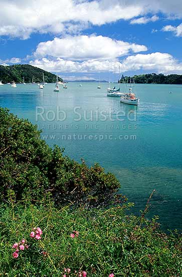 Mangonui Harbour in Doubtless Bay, Far north, Northland, Far North District, Northland Region, New Zealand (NZ) stock photo.