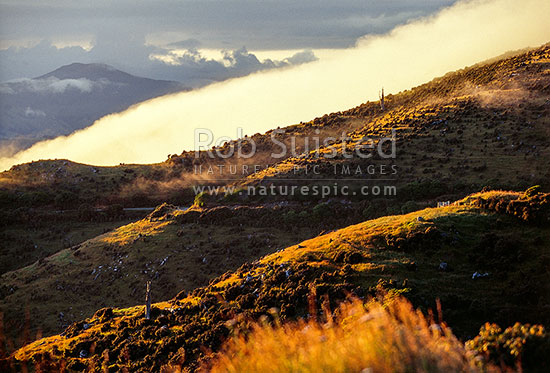 Misty farmland on Banks Peninsula, Akaroa, Banks Peninsula District, Canterbury Region, New Zealand (NZ) stock photo.