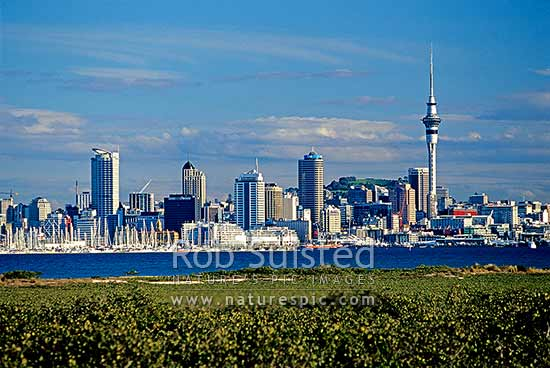 Auckland City and Waitemata Harbour from Shoal Bay with mangroves (Avicennia marina var. australasica). Sky Tower on left, Auckland, Auckland City District, Auckland Region, New Zealand (NZ) stock photo.