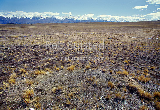 MacKenzie basin country near the Gammock Range - Ben Ohau Range beyond, Tekapo, MacKenzie District, Canterbury Region, New Zealand (NZ) stock photo.