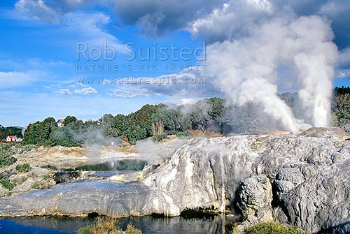 The famous 'Prince of Wales' (L) and 'Pohutu' (R) Geysers at the NZ Maori Arts and Crafts Institute. Te Whakarewarewa Thermal Valley, Rotorua, Rotorua District, Bay of Plenty Region, New Zealand (NZ) stock photo.