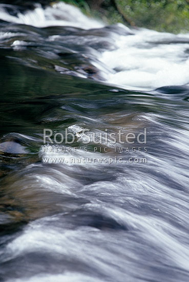Water rushing over rocks in river. rapids, Te Urewera National Park, New Zealand (NZ) stock photo.