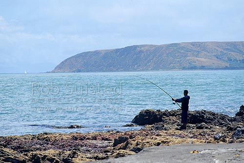 Fisherman fishing off rocks at Titahi Bay, Mana Island beyond, Titahi Bay, Porirua City District, Wellington Region, New Zealand (NZ) stock photo.