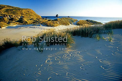 Evening light in sand dunes of Sandfly Bay Beach. Animal tracks on sand ripples, Otago Peninsula, Dunedin City District, Otago Region, New Zealand (NZ) stock photo.