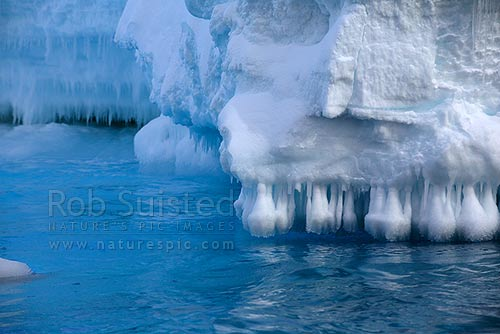 Sea icicles forming on undercut lip of the Drygalski Ice Tongue from wave action and freezing seawater, Ross Sea, Antarctica District, Antarctica Region, Antarctica stock photo.