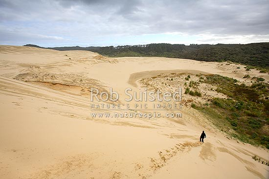 Person running down giant sand dunes on (90) Ninety Mile Beach. Footprints in sand and textures, Te Paki, Cape Reinga, Far North District, Northland Region, New Zealand (NZ) stock photo.