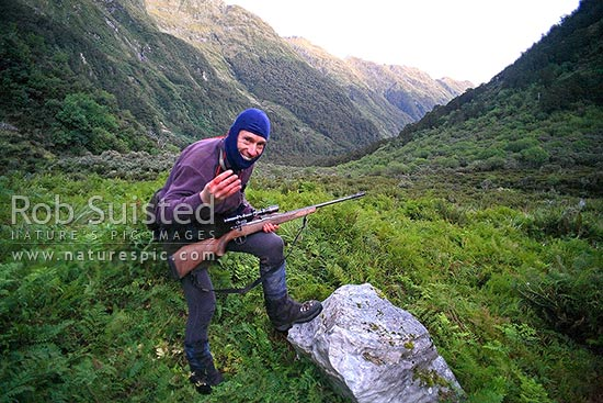 Deerstalker or hunter noting the reply of 4 roaring stags or bulls while hunting in the rut period, Fiordland National Park, Southland District, Southland Region, New Zealand (NZ) stock photo.