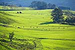 Green paddocks of Rauhine Ranges