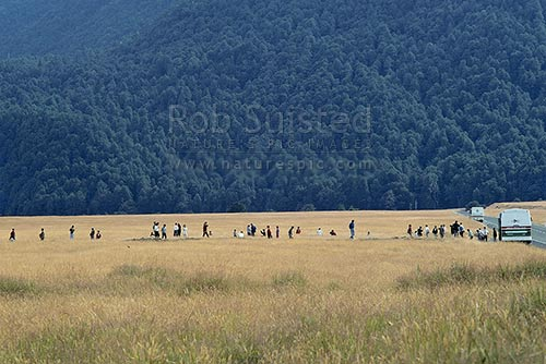 Japanese Tourists in a field of long grass photographing the Eglinton Valley enroute to Milford Sound. Tourist bus parked on side of road, Fiordland National Park, Southland District, Southland Region, New Zealand (NZ) stock photo.