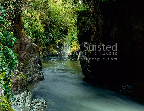 Monkey Puzzle Gorge, Martyr River, Cascade, South Westland, South Westland, Westland District, West Coast Region, New Zealand (NZ) stock photo.