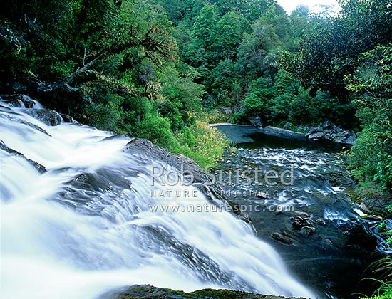 Aniwaniwa stream at the top of Te Tangi o Hinerau falls (15.2metres), Te Urewera National Park, Wairoa District, Hawke's Bay Region, New Zealand (NZ) stock photo.